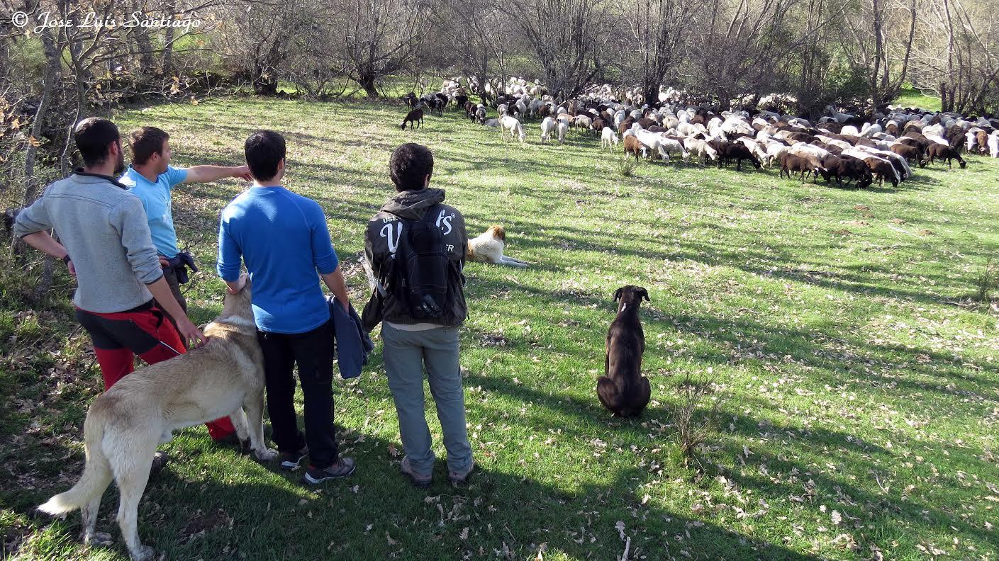 En Tierra de Lobos y Osos
